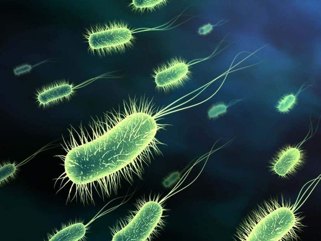 plastik-bakterii