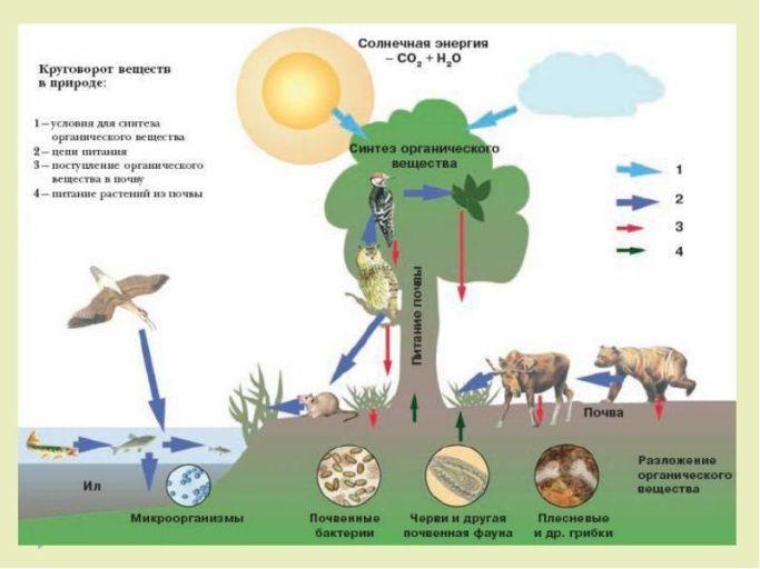 Значение почвы для человека Круговорот веществ в природе