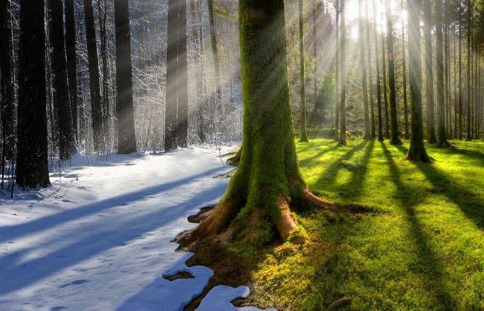 Зима лето в лесу