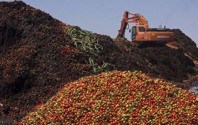 Утилизация отходов овощей