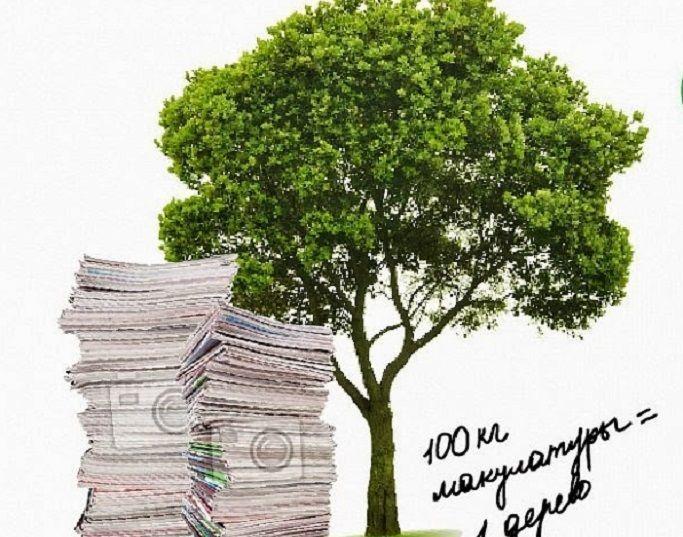 Сколько нужно макулатуры чтобы спасти одно дерево балашиха где сдать макулатуру