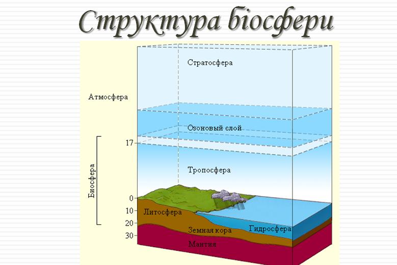 Биосфера стркутура