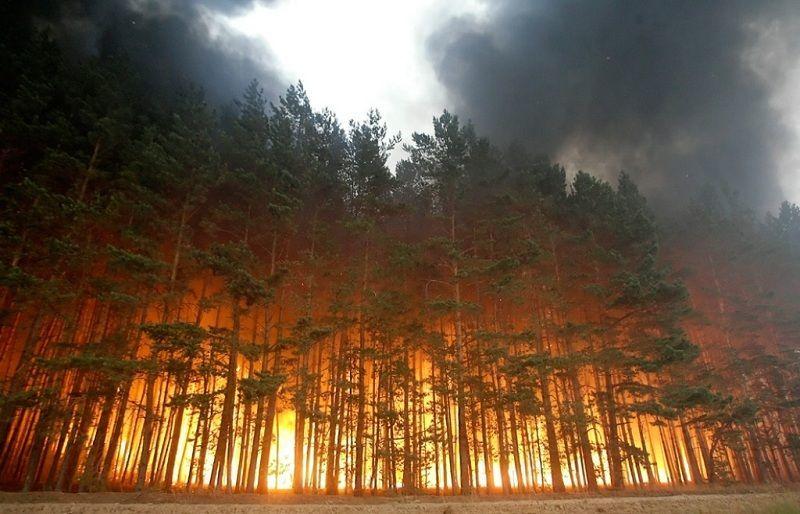 Уничтожение растений и животных