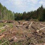 Вырубка-леса