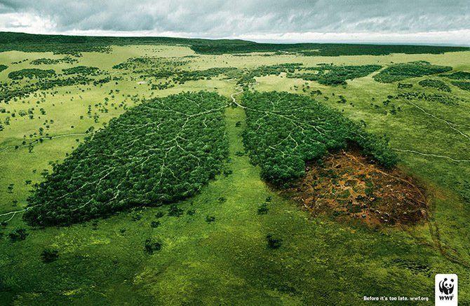 Яркие примеры экосистем