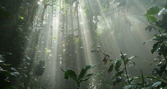 вертикальная биосфера