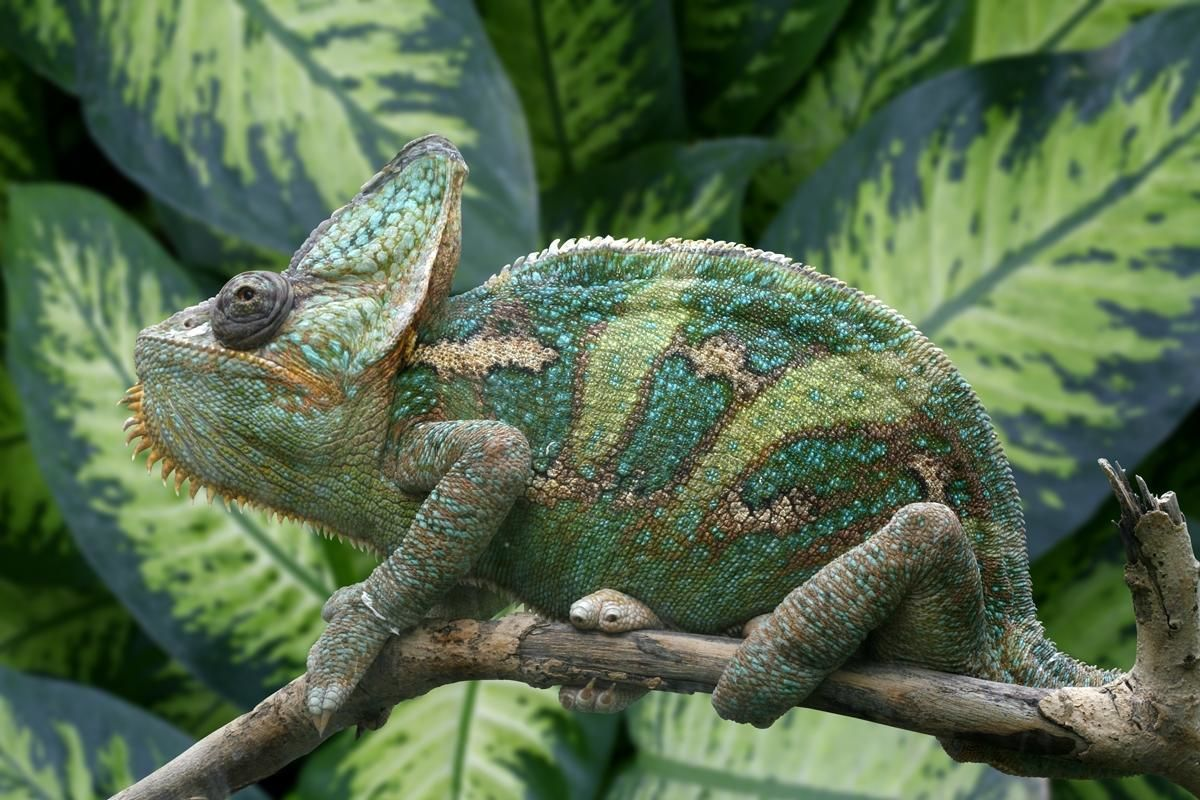 животных в биоценозе