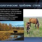 Экологические проблемы степей
