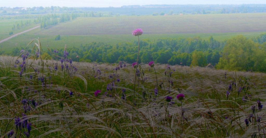 Почвы Курской области