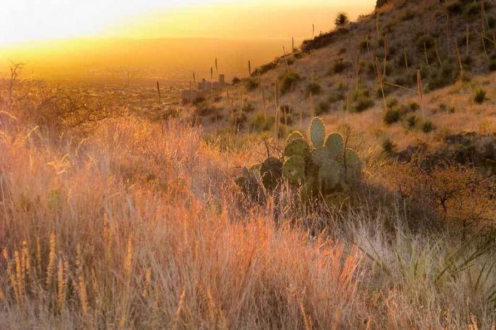 Пустыня и ее характеристики