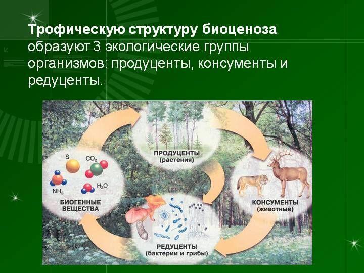 Размеры биоценоза