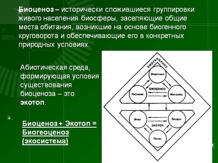 биоценозы 2