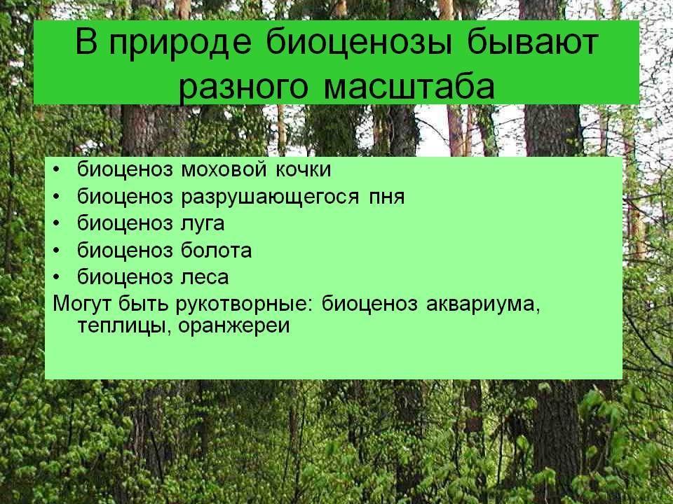 биоценозы