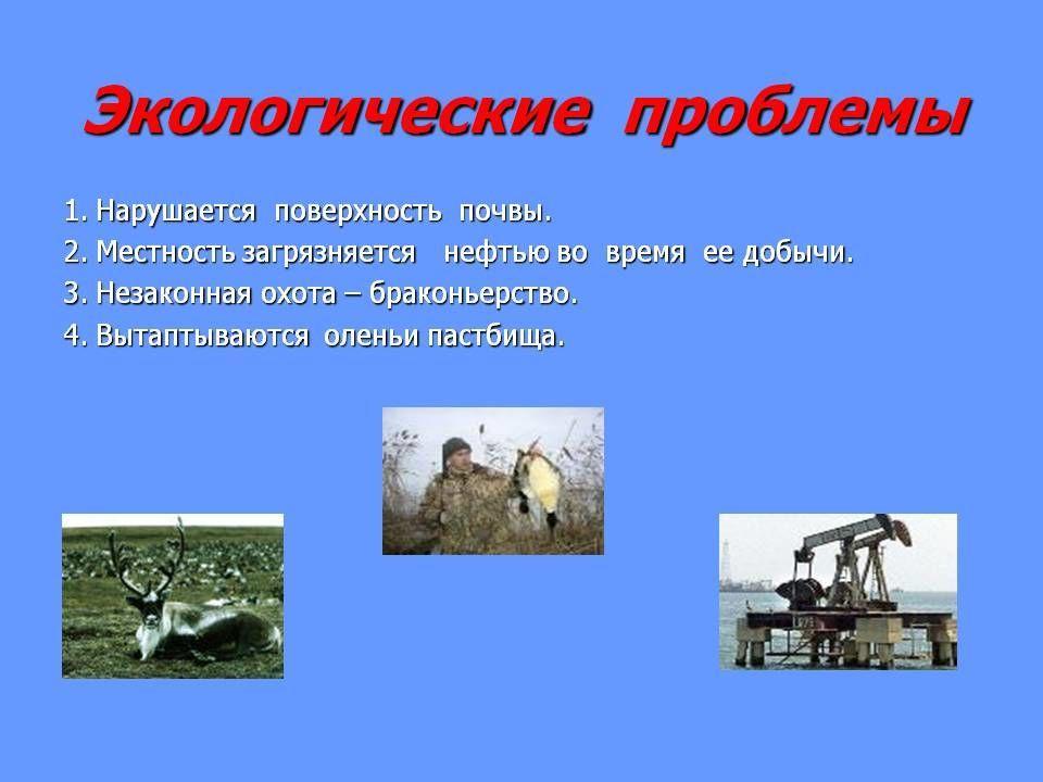 экологические проблемы тундры