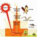 энергия экосистем