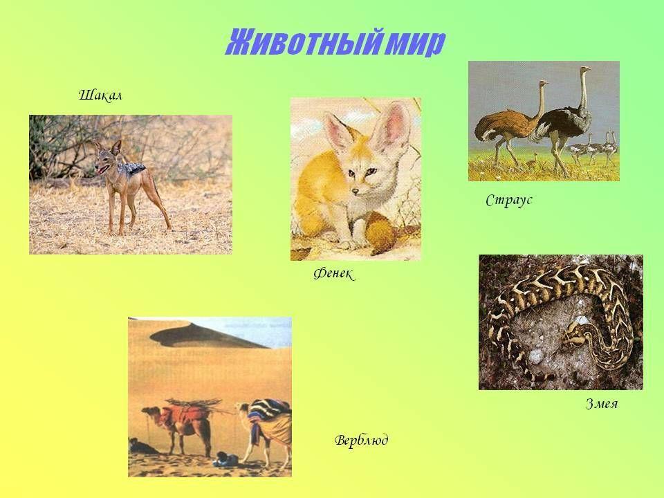 Доклад на тему исчезновение животных и растений 7884
