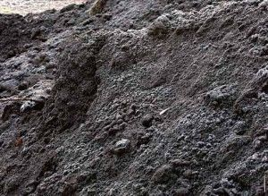 Гумус почвы