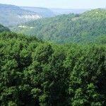 Лесные богатства