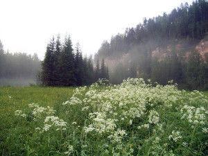 Видовой состав флоры и фауны