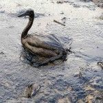 Загрязнение реки Лена