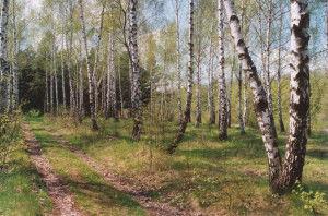 Смешанные леса