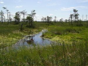 Типы экосистем