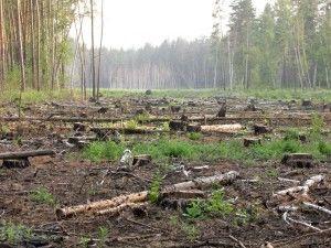 Глобальні екологічні проблеми людства