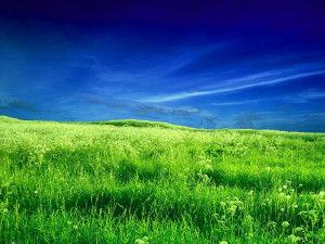 Экосистема поля