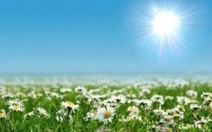 экосистемы энергия от Солнца