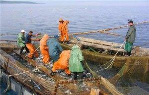 чёрное море и его проблемы