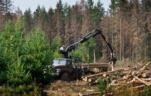 экологические проблемы тайги