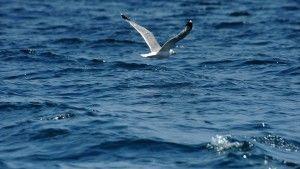 проблемы чёрного моря