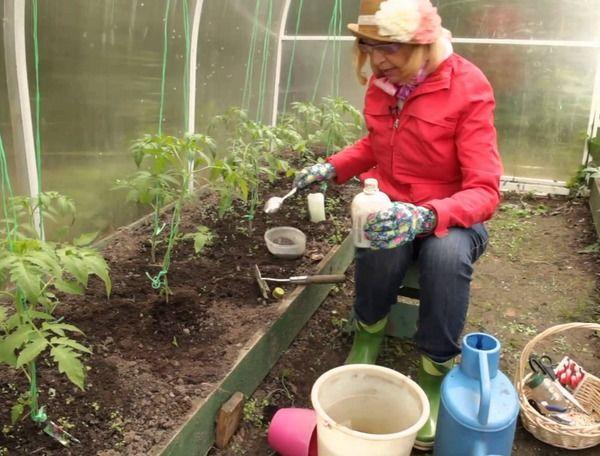 как удобрять помидоры