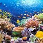Водные экосистемы