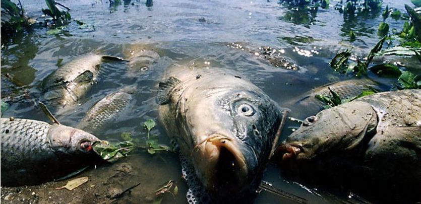 последствия загрязнения воды