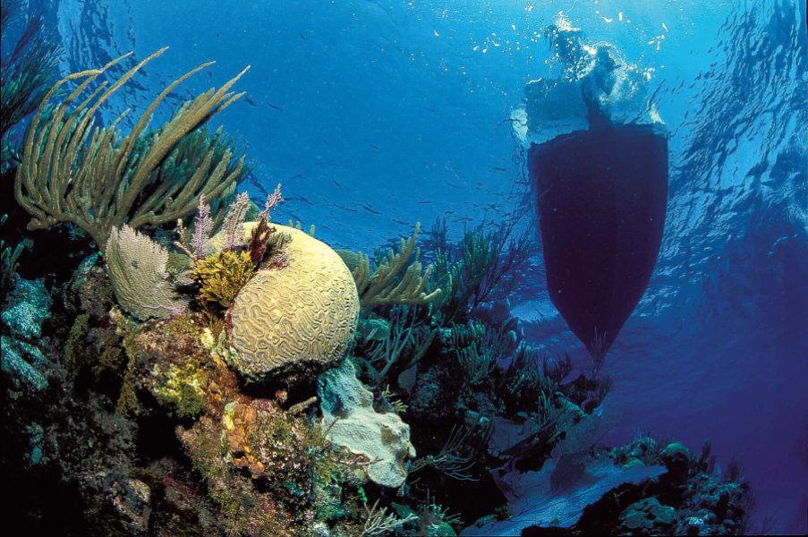 Морские экосистемы