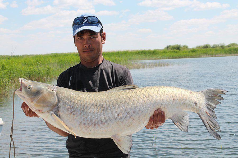 Рыбалка на Балхаше