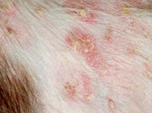 Аллергическая реакция на укус насекомого у собаки