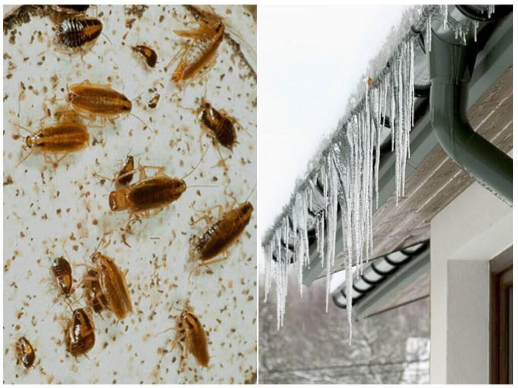 Действие холода на тараканов