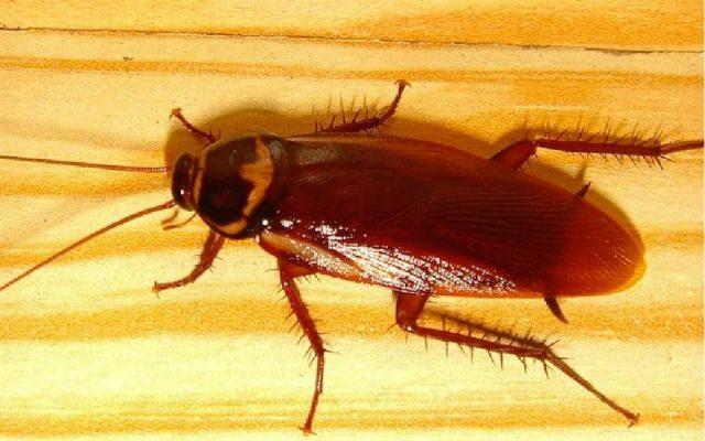 Действие света на тараканов
