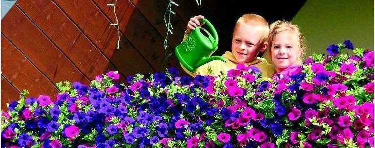 Дети поливают петунии
