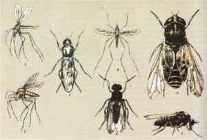 Компоненты гнуса  1 - москит (самец)  2 - москит (самка)  3 - мокрецы  4 - комар  5 - большой серый слепень  6 - мошка (самец) 7 - мошка (самка).