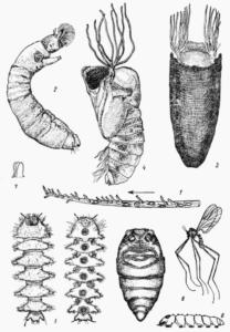 Личинки мошек в воде