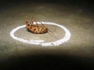 Мелок сражает тараканов на повал