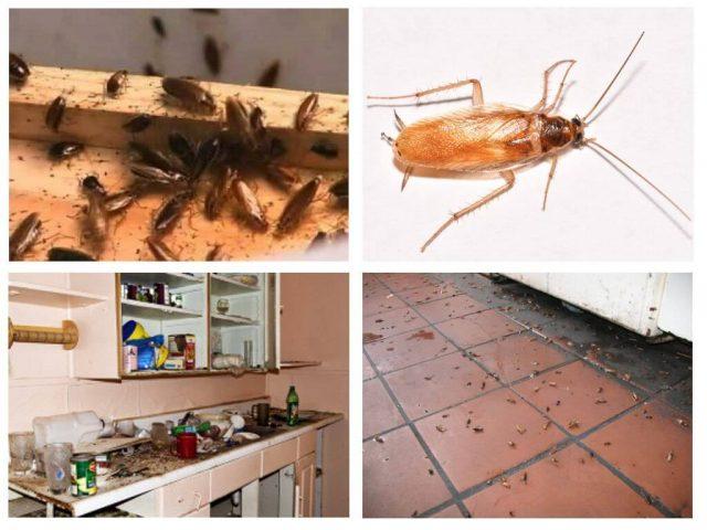 Места распространения тараканов