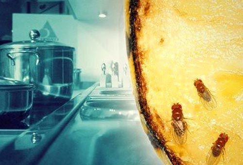 Мошки на кухне
