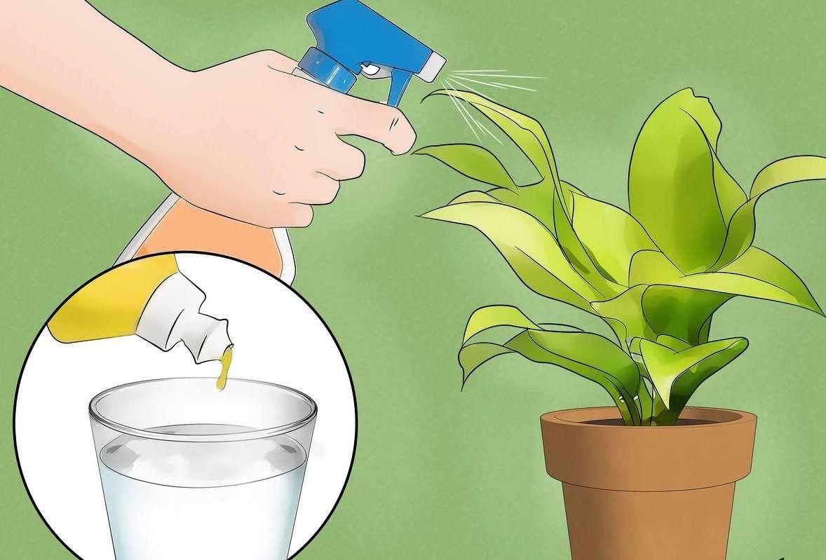 Опрыскивание листвы растения подверженного нападению мошек