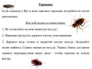 Причины по которым тараканы не покидают дом