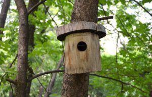 Скворечник поможет защитить дерево от насекомых