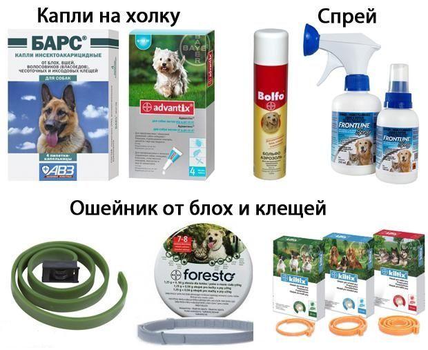 Средства от насекомых у собак